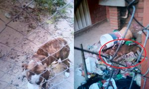 Maltrato animal, Puebla, perros