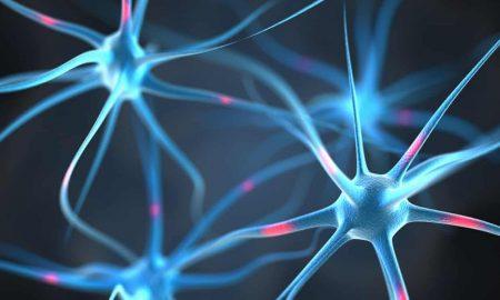 neuronas biónicas
