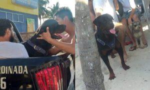 perro, perro rottweiler, niño, yucatan