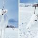 reno albino fotógrafo