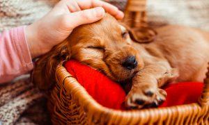 perros, cuidado, frentes fríos, doghero