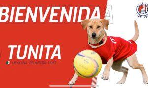 Perrito - San Luis - Futbol - Tunita