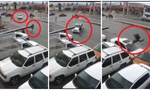 chihuahua, hombre, atropellado, accidente