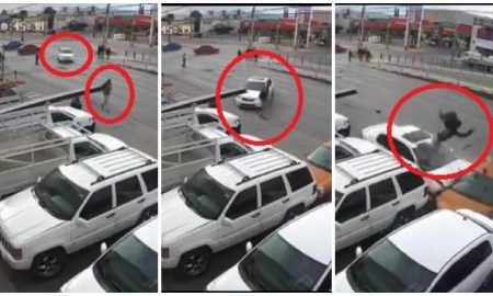 chihuahua, hombre, atropellado, accidente