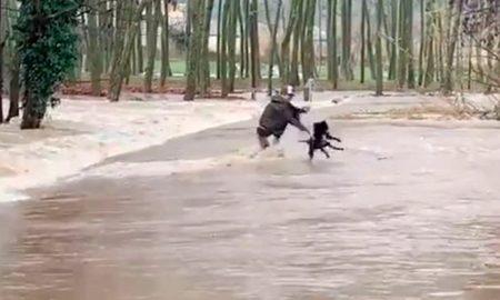 mascota, maltrato animal, España, río