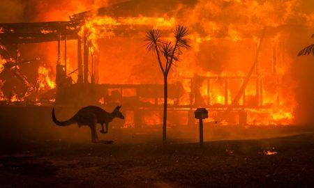 incendios, Australia, animales, incedio forestal