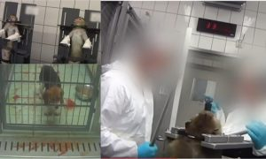 laboratorio Alemania violencia animal viral