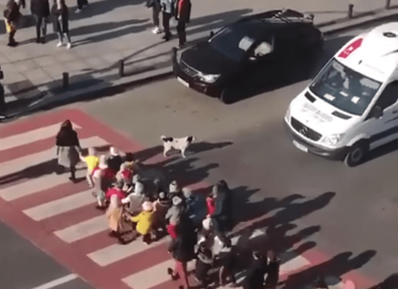 perrito callejero, actualidad, video, viral, perro