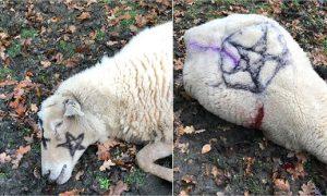 ovejas Londres rituales satánicos