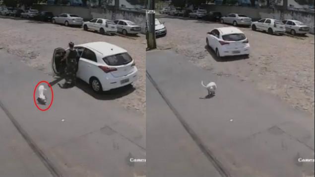 mujer, perrito, brasil, abandono