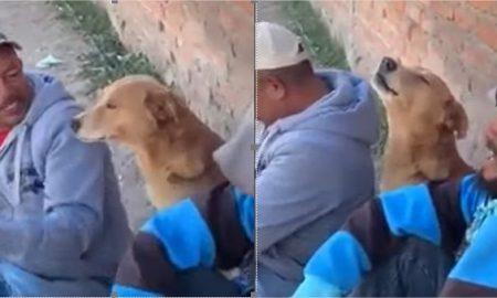 Los Temerarios viral perro canción