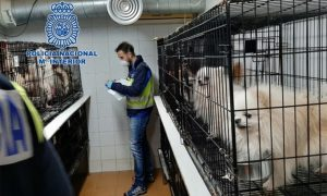 perros, rescatados, ilegal, España, maltrato animal