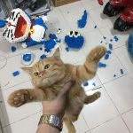 gato viral Tailandia