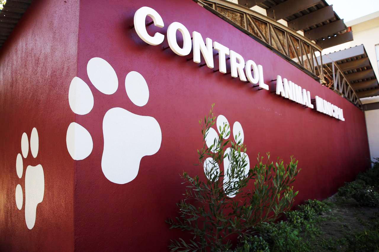 Primer-clinica-veterinaria-ayuntamiento