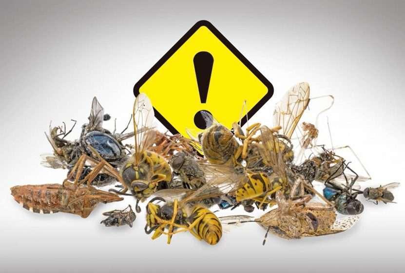 insectos, extinción, México, hábitat, cambio climático