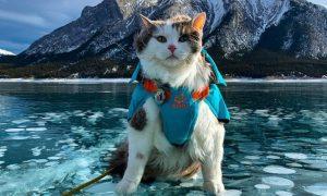 Gary, gato, explorador, Instagram