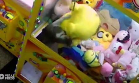 gato, pikachu, pokemon, video, viral, maquina