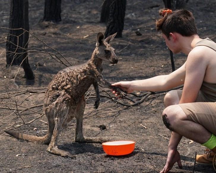 Australia, especies, incendios, Internacional, animales, hábitad
