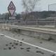 aves, animales, habitad, España, Tarragona, medio ambiente, tóxico