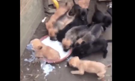 perros, can, actualidad, lo viral, ternura, video