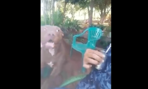 video, viral, actualidad, perro, can, chistoso