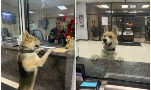 can, perro, perdido, EEUU, Texas, actualidad, lo viral, mascota