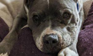 maltrato animal, perro, Rusia, pareja, asesinato