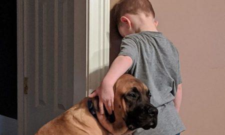 perro, acompaña, niño, castigo, foto, viral,