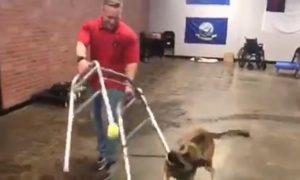 perro-entrenamiento-falla-video-viral