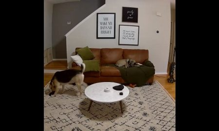 video, actualidad, lo viral, perrito, mascota