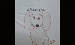 perrito, actualidad, San Felipe, nacional, menor de edad, animal