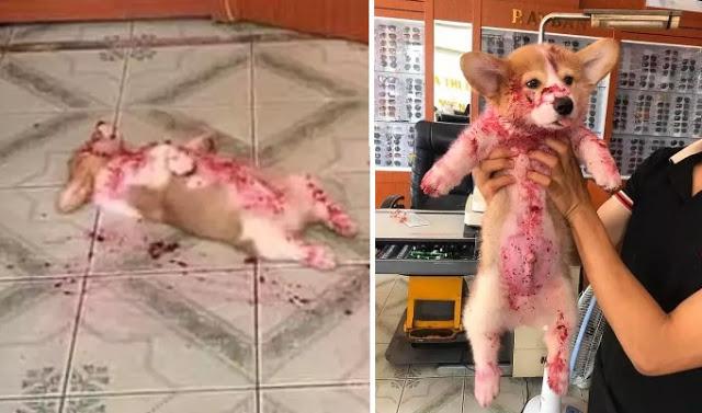 lo viral, actualidad, perro, can, redes sociales, cachorro