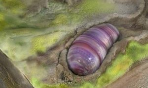 fósil, Australia, ancestro, ciencia, UC Riverside, EEUU, científicos
