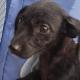 chachorro, maltrato animal, perro, viral, Venezuela