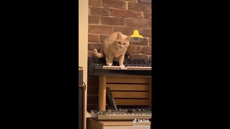 Piano, gato, musica, suspenso, video, viral, redes
