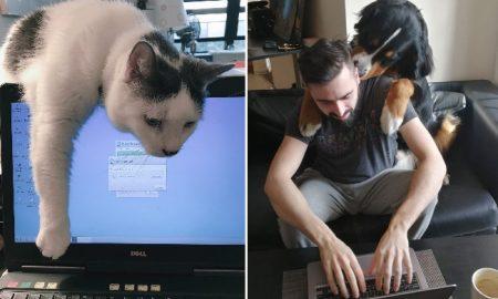 mascotas, coronavirus, home office, covid-19, medidas preventivas, pandemia, actualidad, lo viral