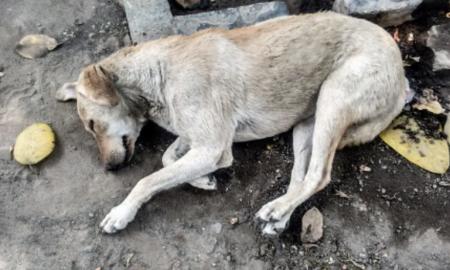 abandono animal, mascota, perro, maltrato animal, México, nacional, morena, Ricardo Monreal