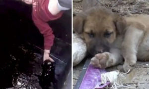 can, perro, accidente, petróleo, Turquía, menor de edad, acto heroico, actualidad, lo viral