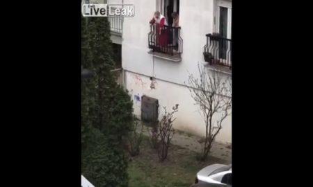 Perro, balcón, paseo, patio, video, viral