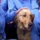 perro, médicos, coronavirus, cuarentena, China, Hubei, actualidad