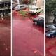 Argentina, lo viral, internacional, animales, sangre, enfermedades