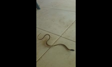 vibora-serpiente-telarana-video-viral