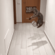 portero, video viral, Italia, mascota, fútbol
