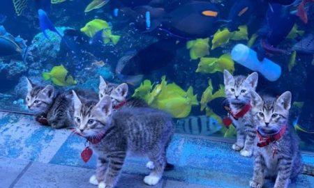 felinos, acuario, pandemia, gatos, mascotas, video, viral, actualidad, tierno