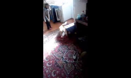 Gato, boliche, hombre, hijos, juega, Rusia, video, viral