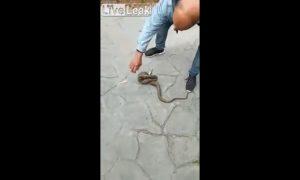hombre, pelea, serpiente, lleva, casa, video, viral