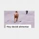 joven, alimentar, perros, video, TikTok, viral, actualidad, perros callejeros