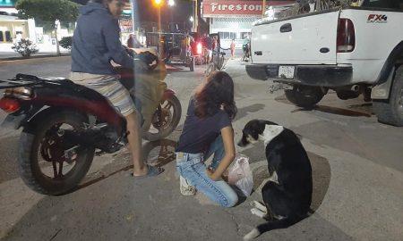 Pareja, moto, perros, comida, cariño, viral