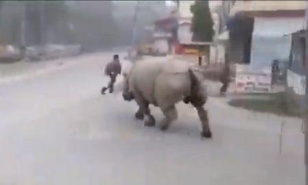 Rinoceronte, calle, ciudad, hombre, persigue, coronavirus, Covid-19, video, viral