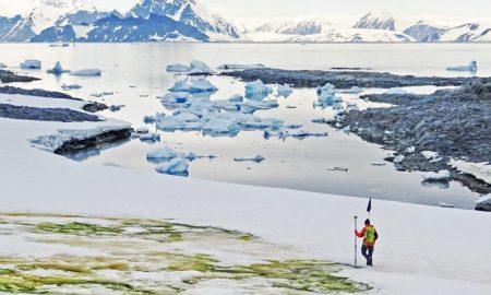Antártida, algas, nieve, cambio climático, temperatura, crisis climática, ambiente